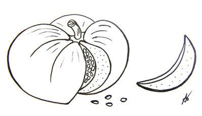 Potiron ou Citrouille?